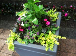 Planter Continuum Services